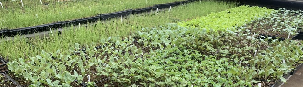 ACES Plant Care Facility